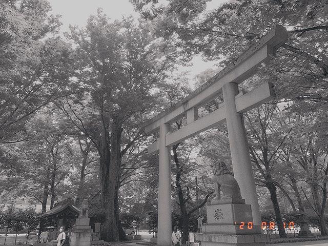 神社の鳥居の写真。左右に狛犬。