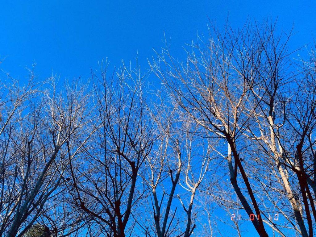 道沿いの木は完全に葉が散って冬の空だった